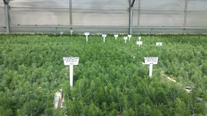 Greenhouse seedlings & tags
